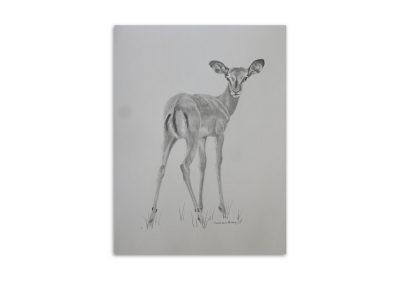 Graham Bray - African Deer
