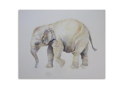Graham Bray - Baby Elephant