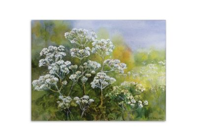 Heather Brown - Hogweed