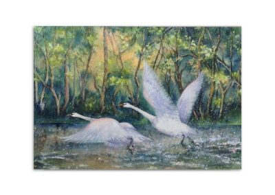 Heather Brown - Swan Take Off