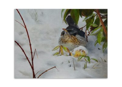 Carol Curtis - Winter Visitor