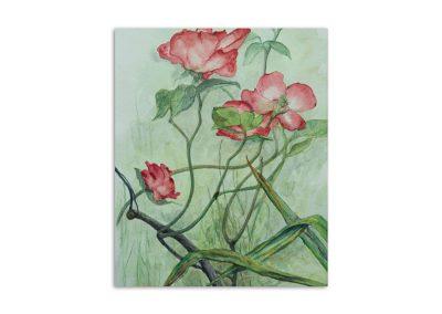 Monique Behean - Roses at Myddelton